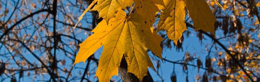 Эпитеты в стихотворении Федора Тютчева «Листья»