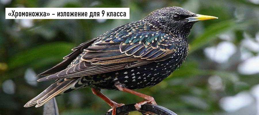 Текст изложения «Хромоножка» – Русский язык – 9 класс