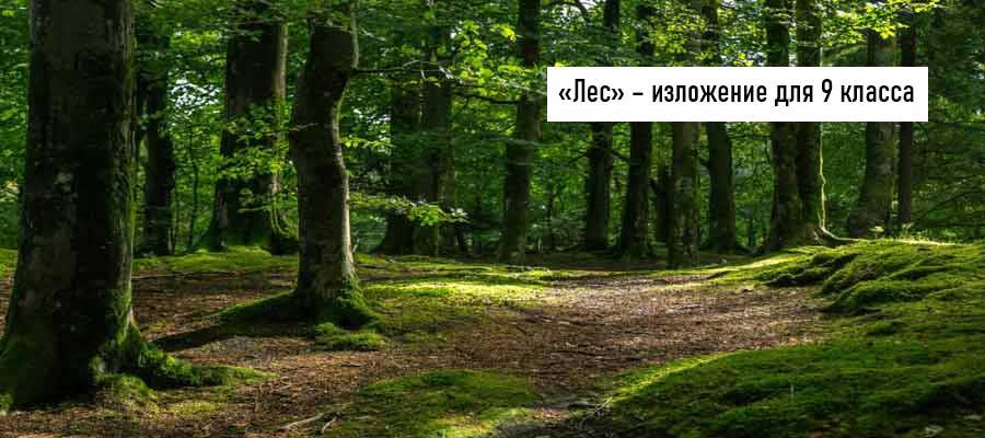 Текст изложения «Лес» – Русский язык – 9 класс