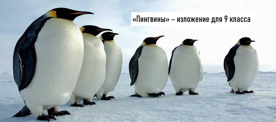 Текст изложения «Пингвины» – Русский язык – 9 класс