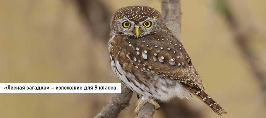 Текст изложения «Лесная загадка» – Русский язык – 9 класс