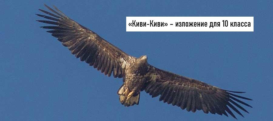 Текст изложения «Киви-Киви» – Русский язык – 10 класс